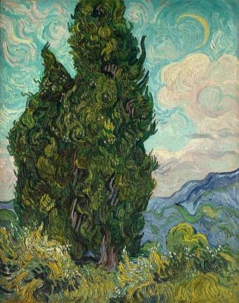 05 Cypress.jpg