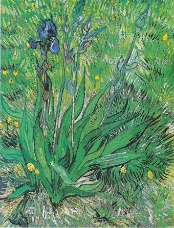 10 Irises.jpg