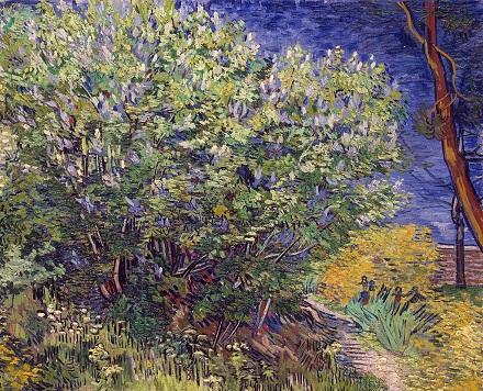 11 Lilac.jpg
