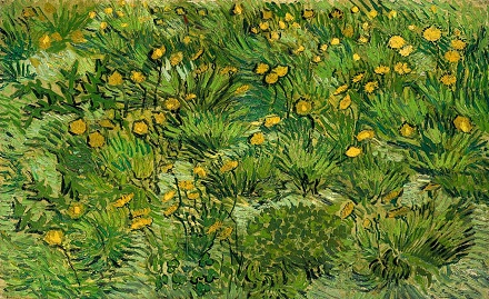 15a 黄色い花の野.jpg