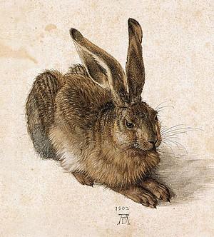 Durer - Hare.jpg