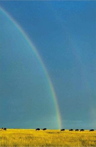 タンザニア・セレンゲティ国立公園の虹.jpg