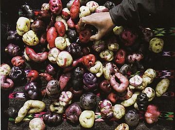 ペルーのジャガイモ.jpg