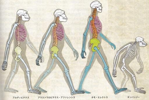 動くことに適応した体.jpg