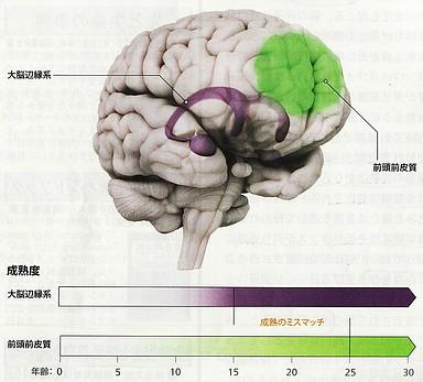 大脳の発達.jpg