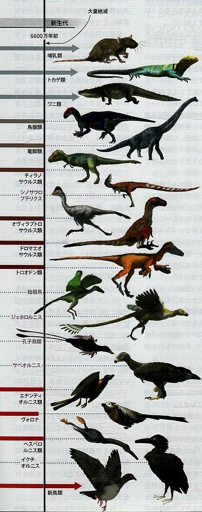 恐竜から鳥への進化.jpg