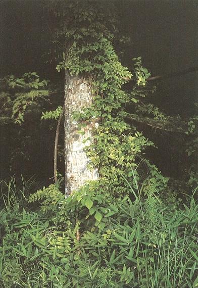 木霊の囁き.jpg