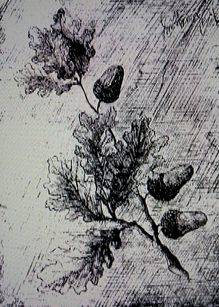 樫の枝.jpg