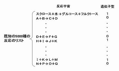 遺伝子型.jpg
