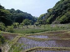 鎌倉中央公園.jpg
