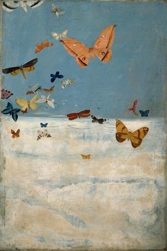 雲の上を飛ぶ蝶.jpg