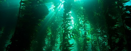 Kelp Forest-1.jpg