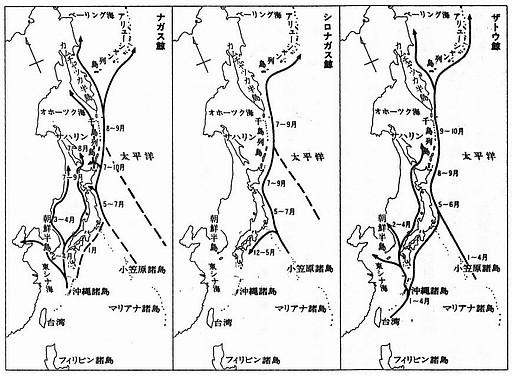 No.21-1 鯨の回遊路.jpg